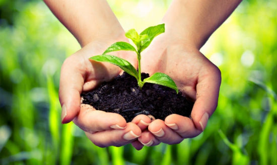 REGISTRATION OF PROTECTION RIGHTS TO PLANT VARIETIES | Business Law
