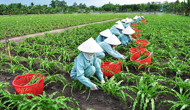 SOME ISSUES ABOUT PROTECTION OF RIGHTS REGARDING PLANT VARIETIES | Business Law